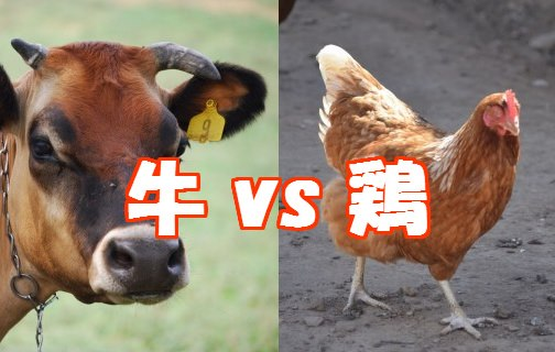 牛か鶏かラーメンスープ人気争い